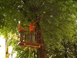 Przedsiębiorstwo GRIN-ESTETYKA Wiesław Zioło - przycinki drzew, wycinki drzew, trawnik z rolki Rzeszów, zakładanie trawników Rzeszów