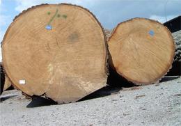 Zakład Produkcyjno-Handlowy WYROBÓW DRZEWNYCH - Drewno dębowe